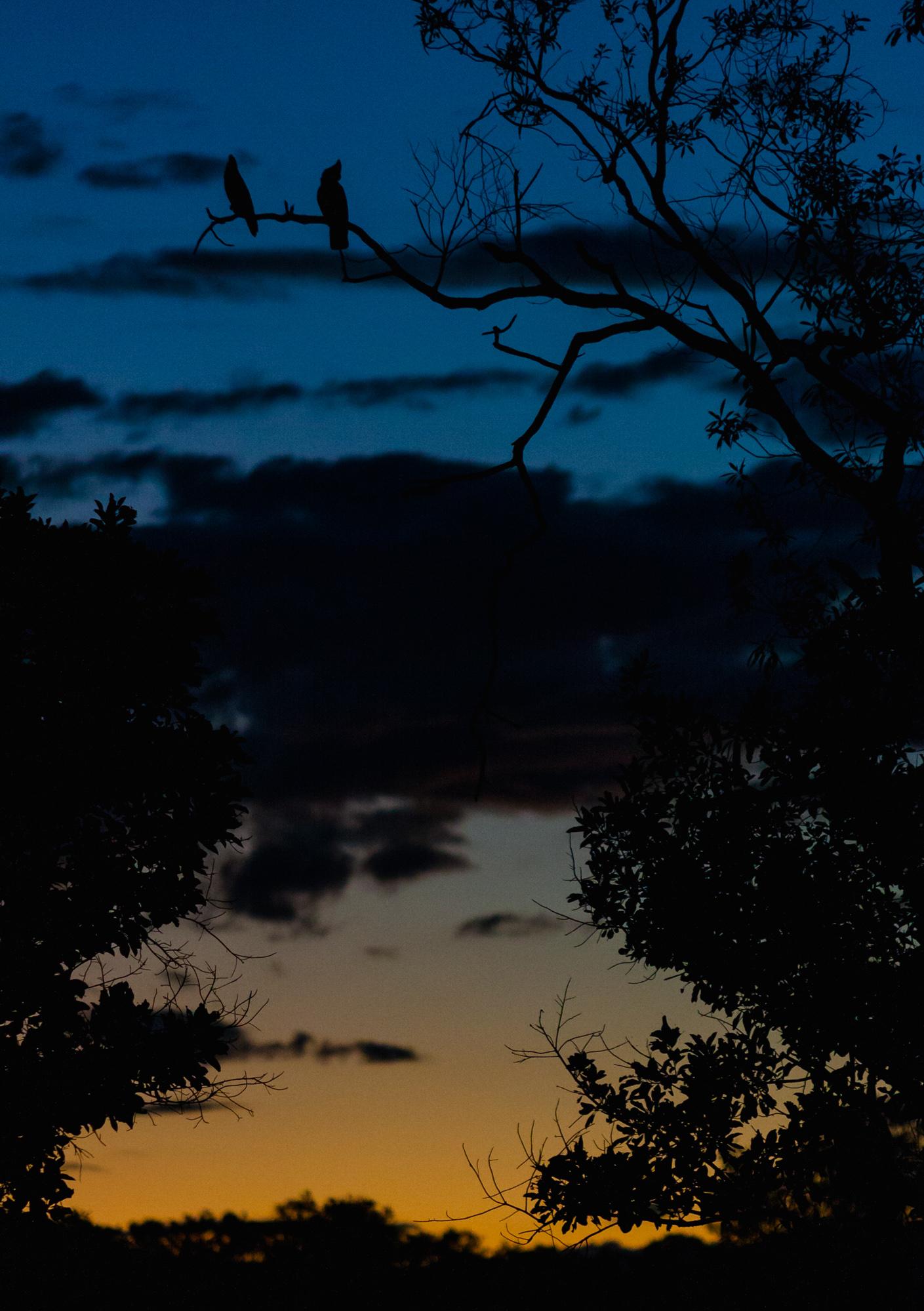 Sonnenuntergang Papageien Outback Australien