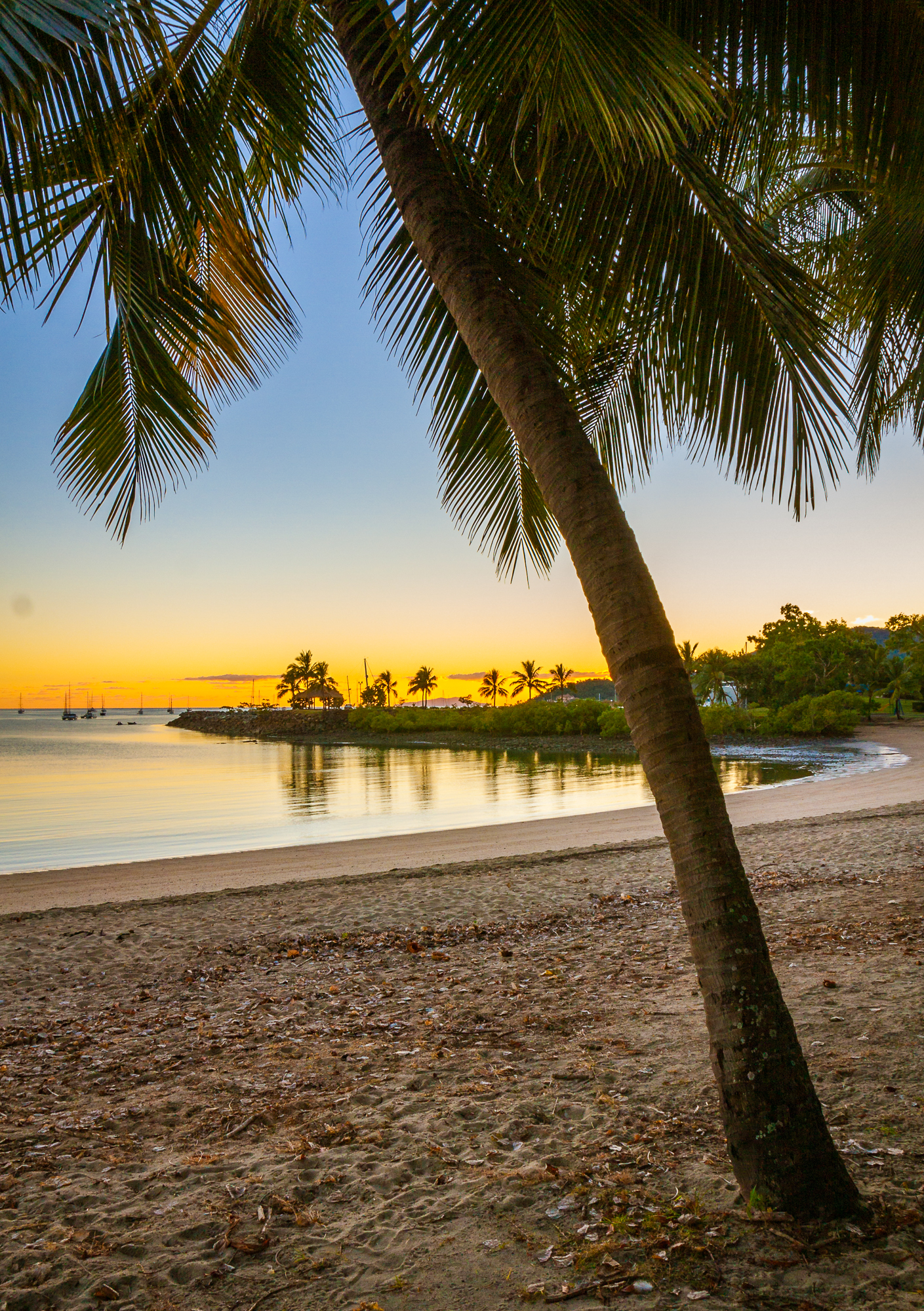 Palme Sonnenuntergang Australien