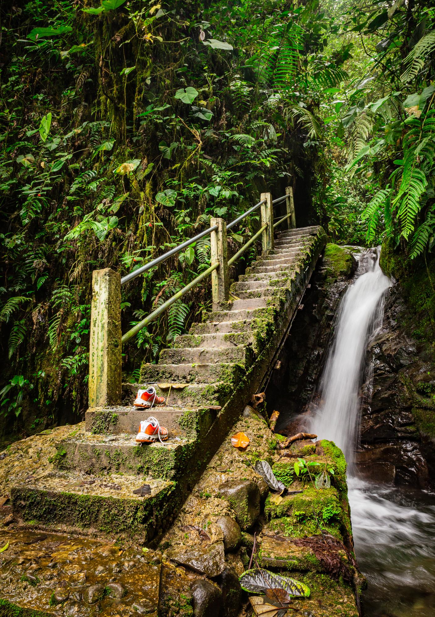 Treppe Dschungel Ecuador Mindo
