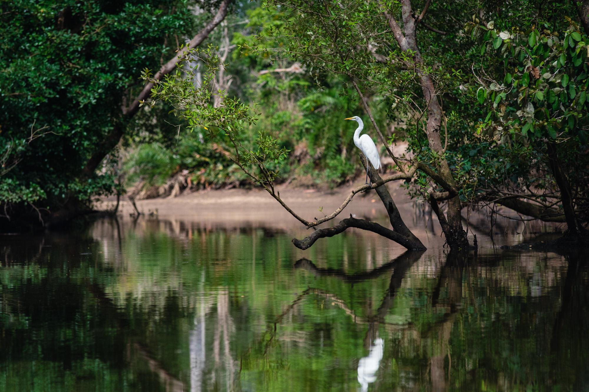 Reiher Fluss Wald